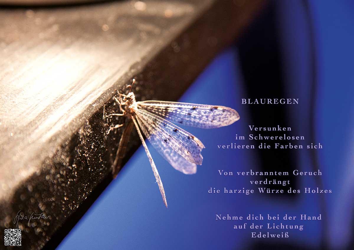 Soundpics: 15 Blauregen