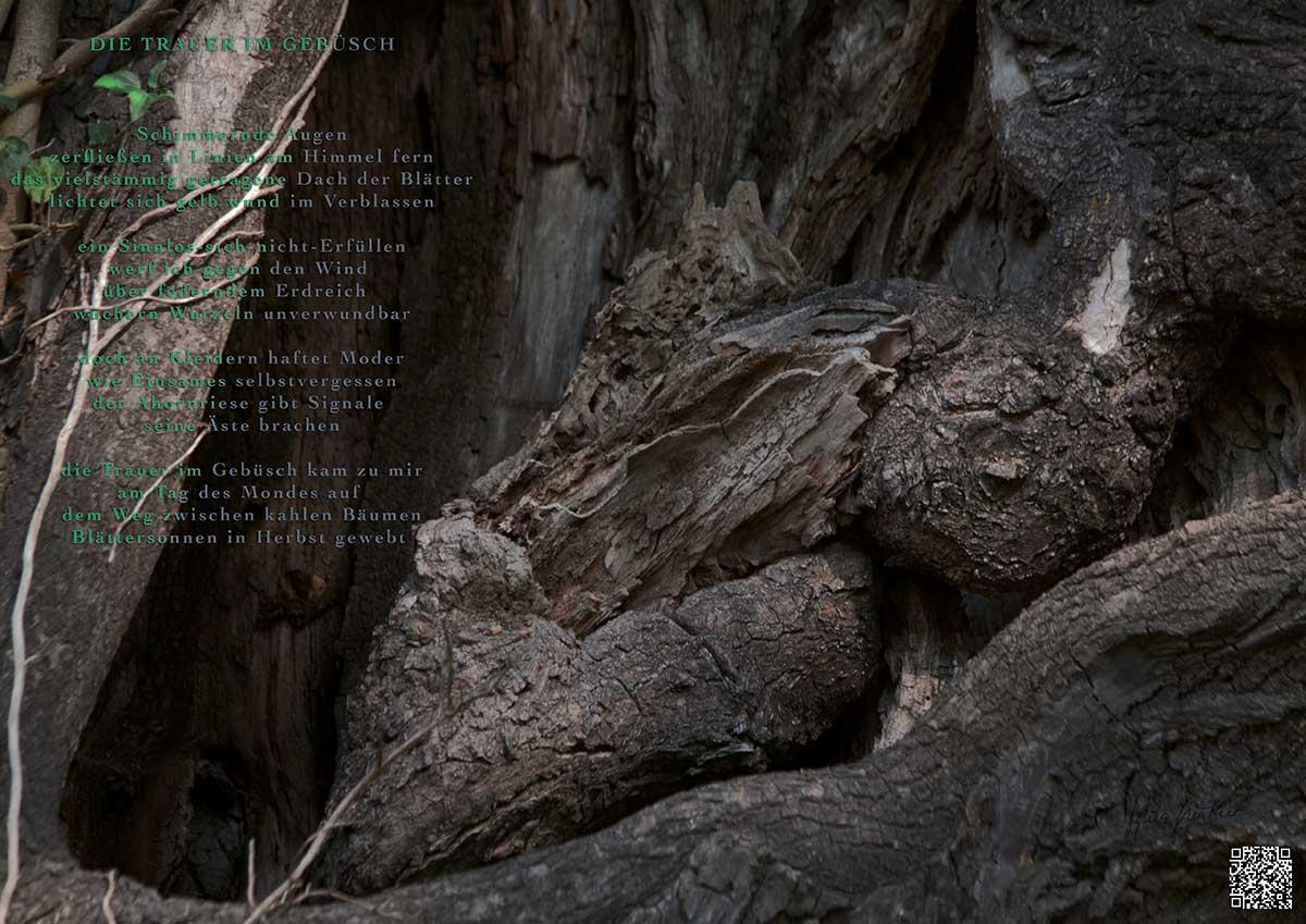 Soundpics: 26 Die Trauer im Gebüsch
