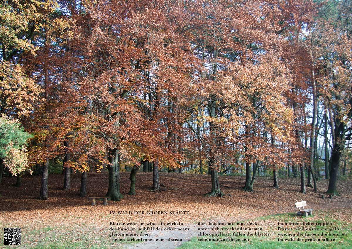 Soundpics: 42 Im Wald der großen Städte