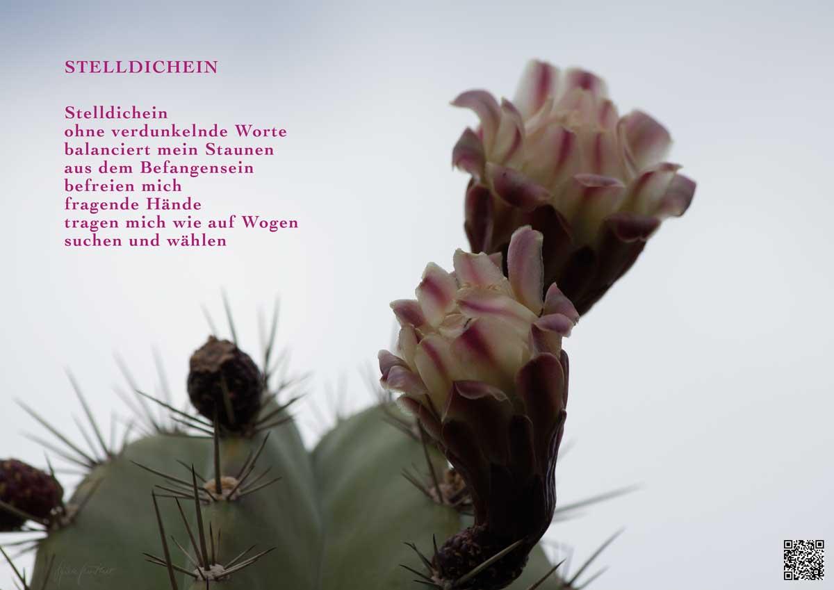 Soundpics: 74 Stelldichein